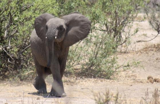 Een klein olifantje.