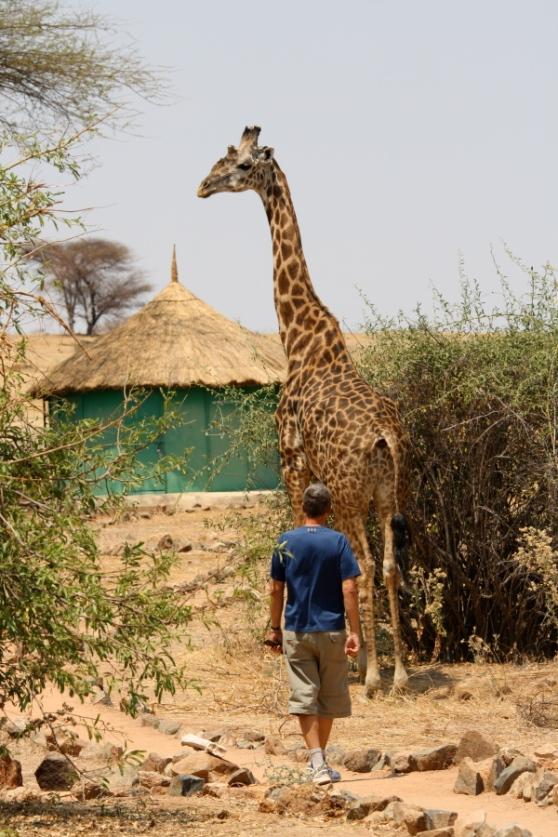 Wandelen met de giraf.
