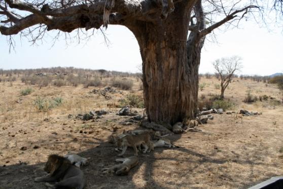 Slapende leeuwen maakt men best niet wakker.
