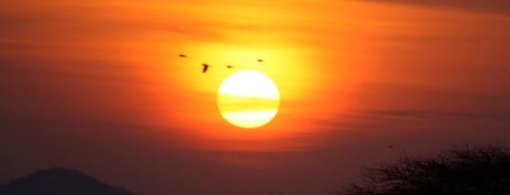 Vogels bij zonsondergang.