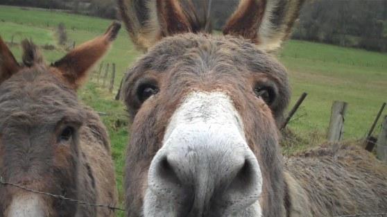 Anderhalve ezelskop
